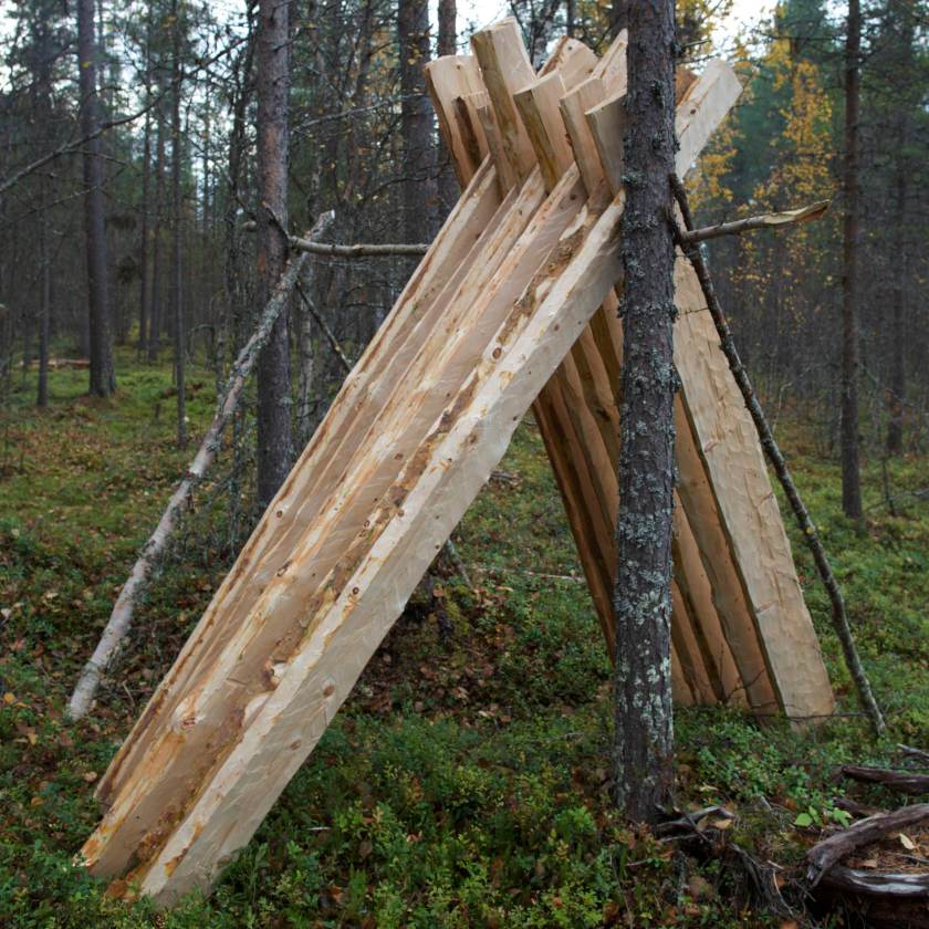 Kløyvd taktro til tørk på mara i skogen. Dette er material som ble kløyvd og rydd på kurset. Foto: Roald Renmælmo