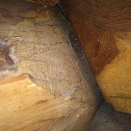 Figur 6a. Til venstre: nærbilde av spor etter meddrag i nov på Renmælmo-stabburet. Til høyre: nærbilde av øksehogg i medfaret. Foto: Henrik Jenssen