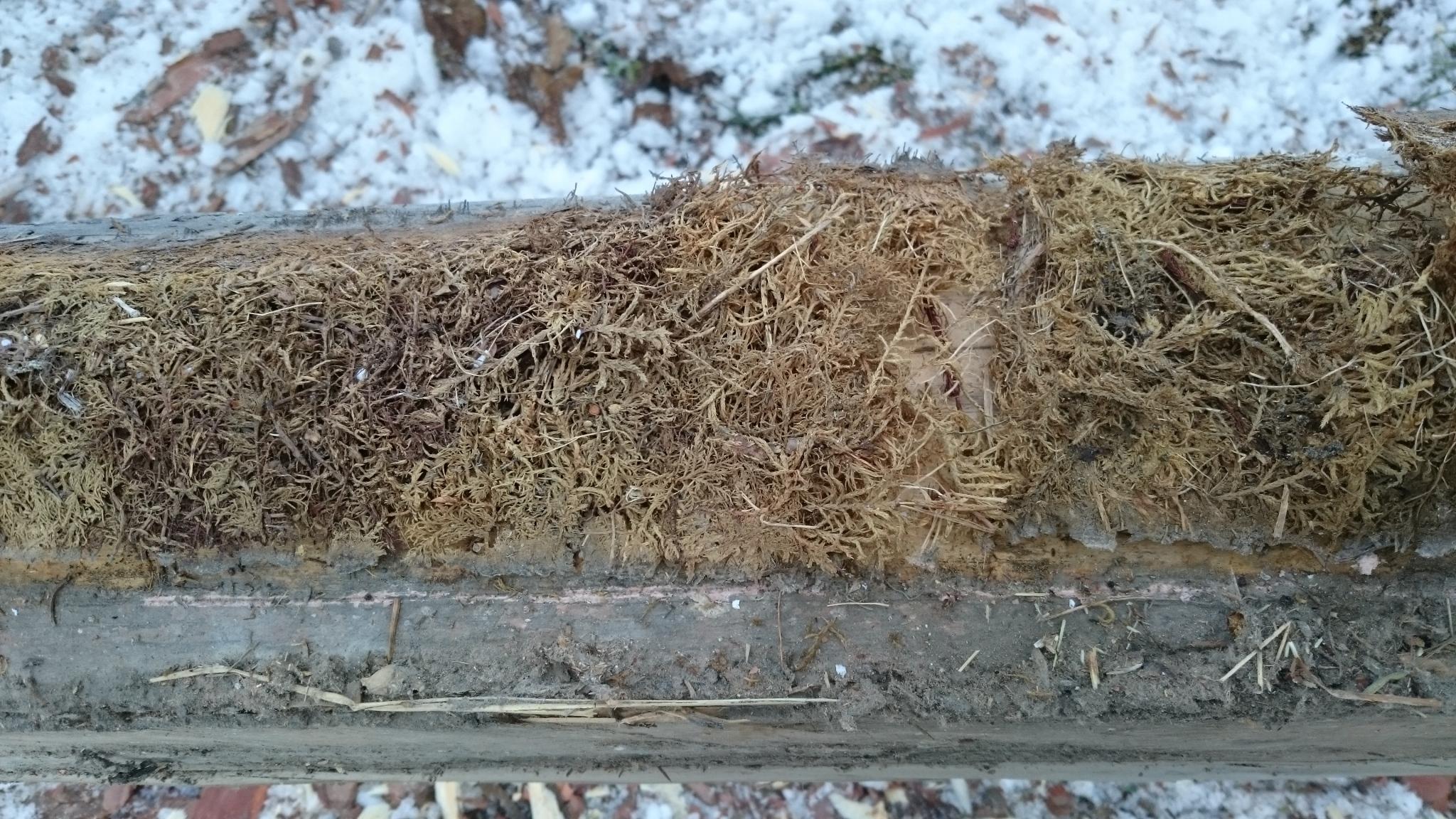 etasjemose-og-furumose-fra-1799-hallingby-buskerud