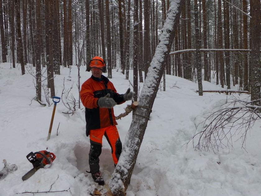 Instruktør Knut Johnsen demonstrerer ein av metodane for å trygt få ned eit tre som har gått fast i eit nabotre. Foto: Siv Holmin