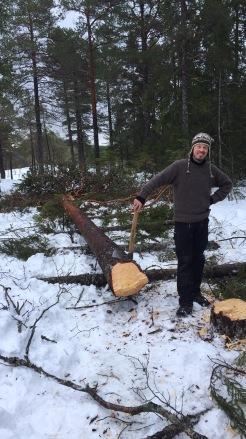 I Dalarna er det tradisjon for å lafte denne knuten i furu, noe vi også gjorde. Foto Kai Johansen.
